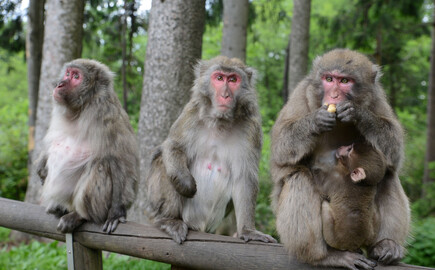 Drei Affen sitzen nahe dem Hotel eduCARE auf einem Zaun
