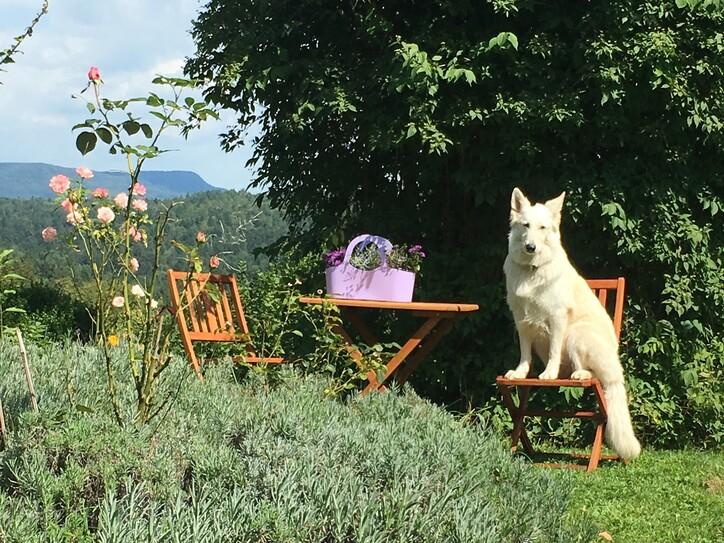 Ein weißer Schäferhund sitzt im Urlaub mit Hund am Ossiacher See auf einem Sessel