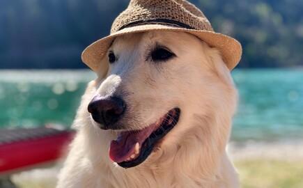 Ein Hund mit Hund im Urlaub im 4-Stern Hotel eduCARE