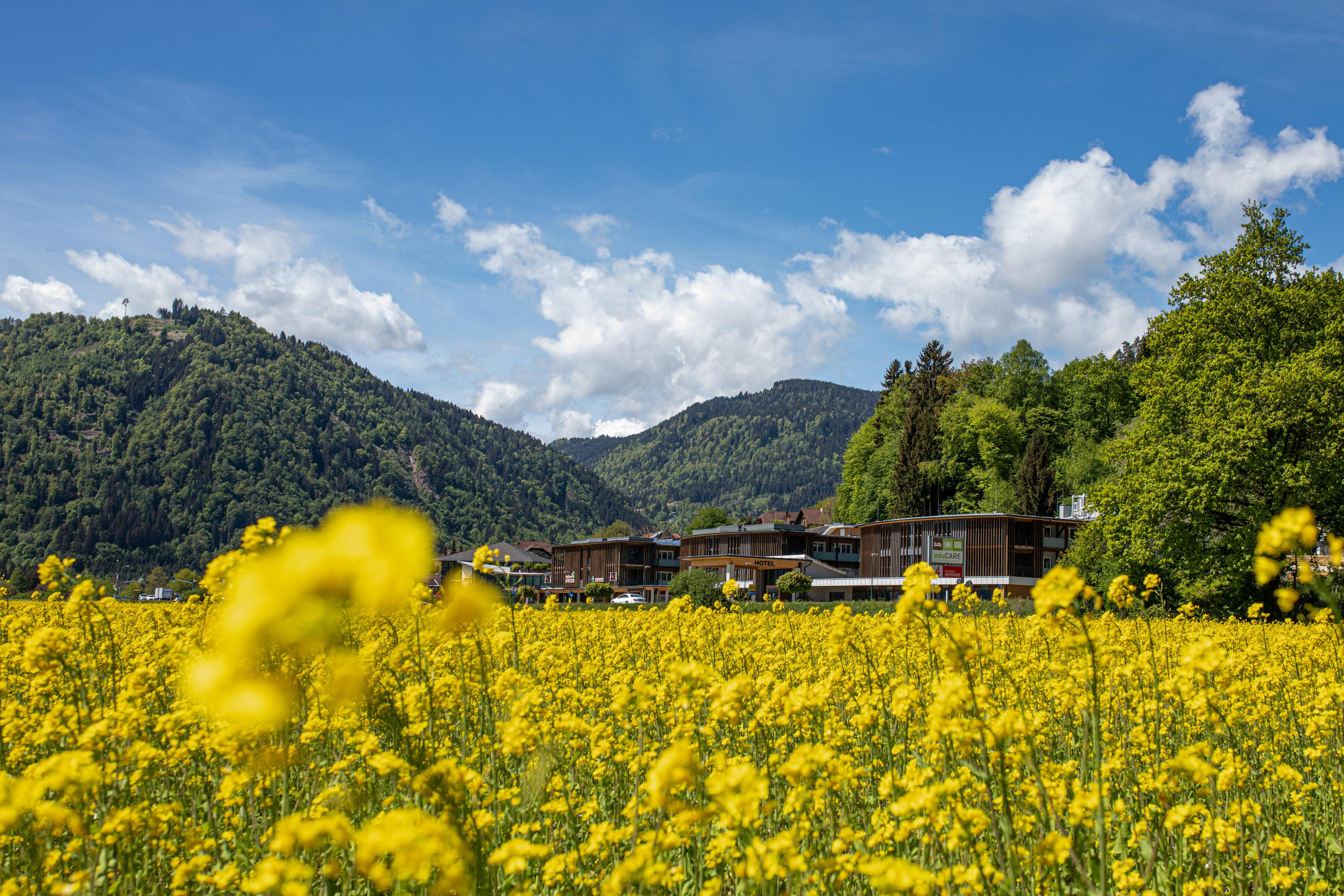 Eine blühende Blumenwiese vorm 4-Sterne Hotel am Ossiacher See